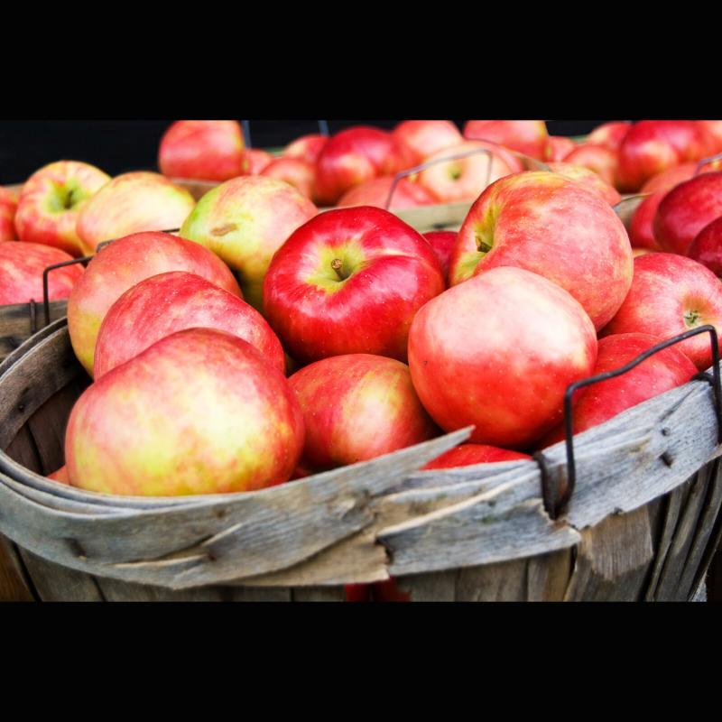 Apfel - Pektin, Pectin